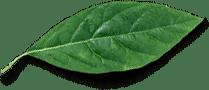 leaf free img - Полисепт