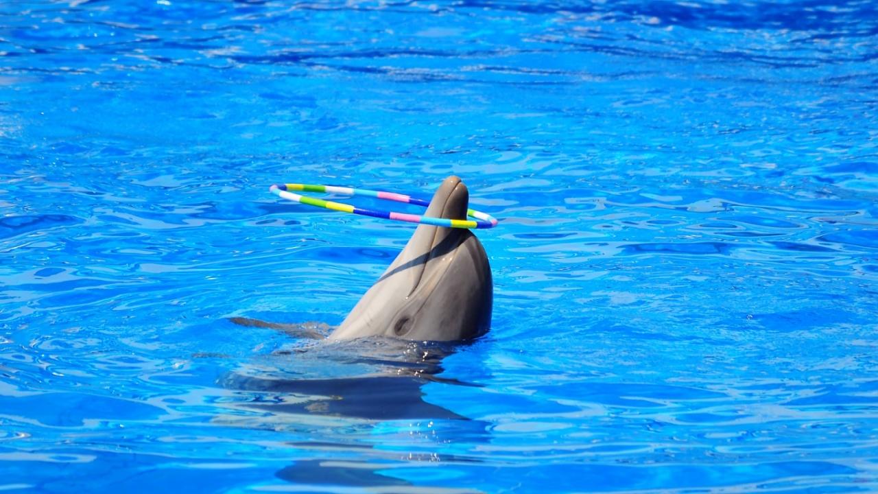полисепт для дезинфекции воды в аквапарках и дельфинариях