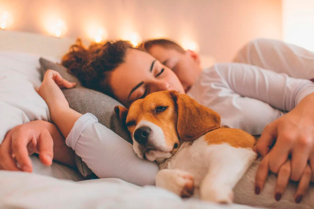 собаки могут принести в дом вирус на лапах
